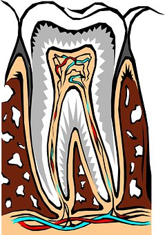 Root Canal Therapy at a Glance